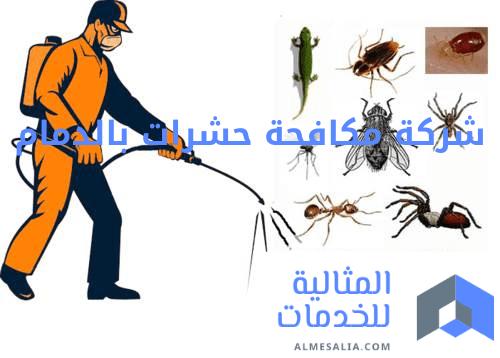 شركة مكافحة حشرات متخصصة